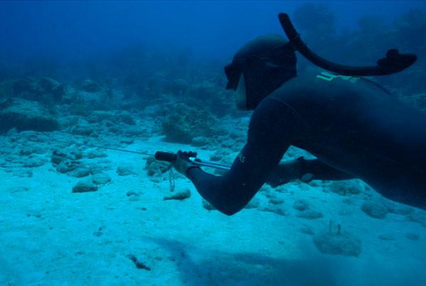 Spearfishing with Bahamas' Freedive National Record Holder Luke Maillis